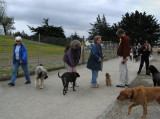 Point Isabel dog park's very busy on Sunday.