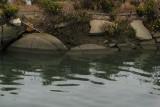 Short bridge over water