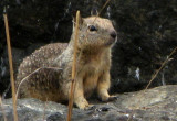 Center of previous squirrel shot