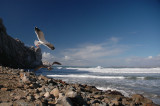 December 18- Morro Bay Breakers