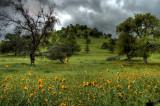 10/6/07- Hillside in Green