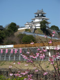 New blossoms and Kakegawa-jō