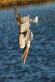::Birds::