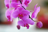 Flower/ Orchid