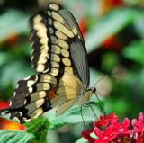 Butterfly 2007