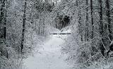 trail...to Cowan Lake