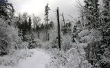 ...trail to Cowan Lake...