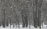...let it snow...