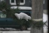 ...Albino Snow Squirrel...