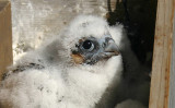 ...back in the nest box...