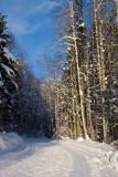 Telemark Cross Country Ski Club