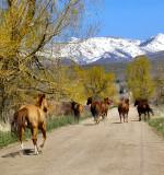 Follow the herd?