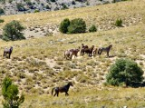 Nevada's wild