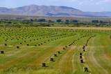 Hay Fields Galore!
