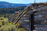 On Spruce Mountain - The Grand Old Bristlecone