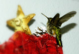 Lost hummingbird