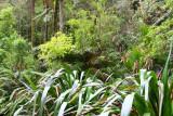 NZ Flax and bush