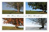 The Four Season of West Bradford
