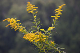 Golden Roadside Grasses