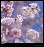 Harmony Spring