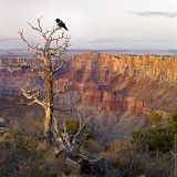 Black Spirit of Grand Canyon