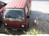 pelican parking. at Mykonos town beach.