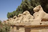 Luxor & Karnak