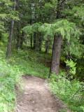 East Fork Mink Creek Trail Scout Mountain P1010447.jpg
