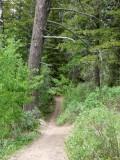 East Fork Mink Creek Trail Scout Mountain P1010494.jpg