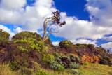 Foreshore landscape