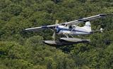 Beaver in Flight