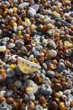IMG_5903.jpg Shells on beach - Point Penmarc'h France - © A Santillo 2014