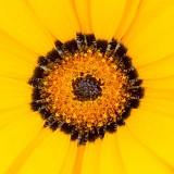 Flora - Nymans NT - West Sussex