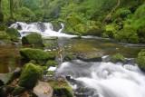 CRW_00436B.jpg Golitha Falls - Redgate, Bodmin Moor - © A Santillo 2003