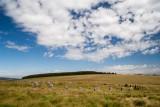_MG_0261.jpg Grey Wethers restored stone circles - Sittaford Tor, Dartmoor- © A Santillo 2005