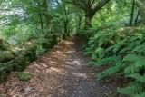 IMG_6568.jpg Ancient trackway or drove way on the margins of Burrator Reservoir - Dartmoor - © A Santillo 2014