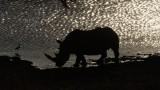 Rhino & Lion Park