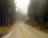 Buddy's Runnin' Roads
