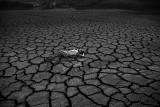 IMG_4667 - Global Climate Change