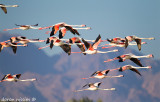 Birds of Eilat