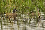 Sweetwater Wetlands Park