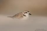 shorebirds__rails
