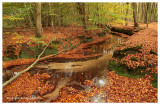 Herfstbeek - Autumn brook