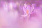 Wild  flowers and plants - Wilde bloemen en planten