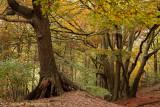 Herfstkleur - Autumn