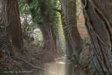 Bosbeek - Forest brook