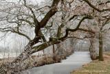 Brook, winter - Beek, rijp