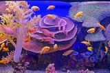 04_Aquarium.jpg