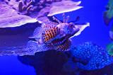 05_Aquarium.jpg