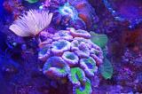 06_Aquarium.jpg